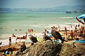 Gulls at san clemente state beach.jpg