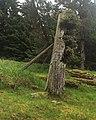 Gwaii Haanas National Park (27277737530).jpg