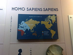 Horniman Museum - The museum's Natural History gallery showing the distribution of modern humans.