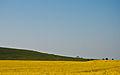 Hackpen Hill, Wiltshire, England, 23 April 2011 - Flickr - PhillipC (5).jpg