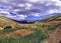 Hare desert-spring.jpg