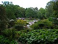 Harlow Carr - view towards the rockery - geograph.org.uk - 224445.jpg