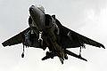 Harrier (5132431981).jpg