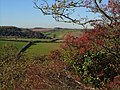 Haws near Butland Wood - geograph.org.uk - 274186.jpg