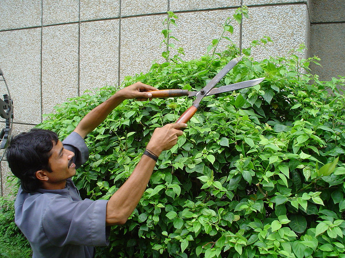 Uncategorized Hedge Trim hedge trimmer wikipedia