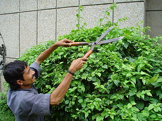 Hedge trimmer - Manual hedge trimming