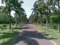 Henarathgoda Botanical Garden 1.jpg