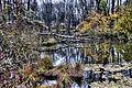 Herbststimmung in der Amper Aue bei Olching, Oberbayern (8193378744).jpg