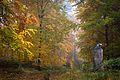 Herbstwald mit Adler.jpg