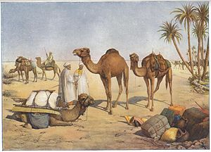 Al Fadl - During Ottoman rule, the Al Fadl chieftains continued to hold the post of amir al-ʿarab and were obliged to provide over 1,000 camels to the sultan each year.