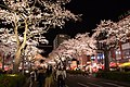 Hitachi Sakura Festival, Ibaraki 33.jpg