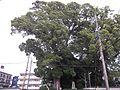 Hongakuji Shizuoka City 2.jpg