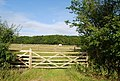 Horse in a paddock behind a gate, Hale Oak Rd - geograph.org.uk - 1380081.jpg