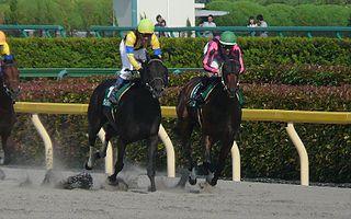 Unicorn Stakes