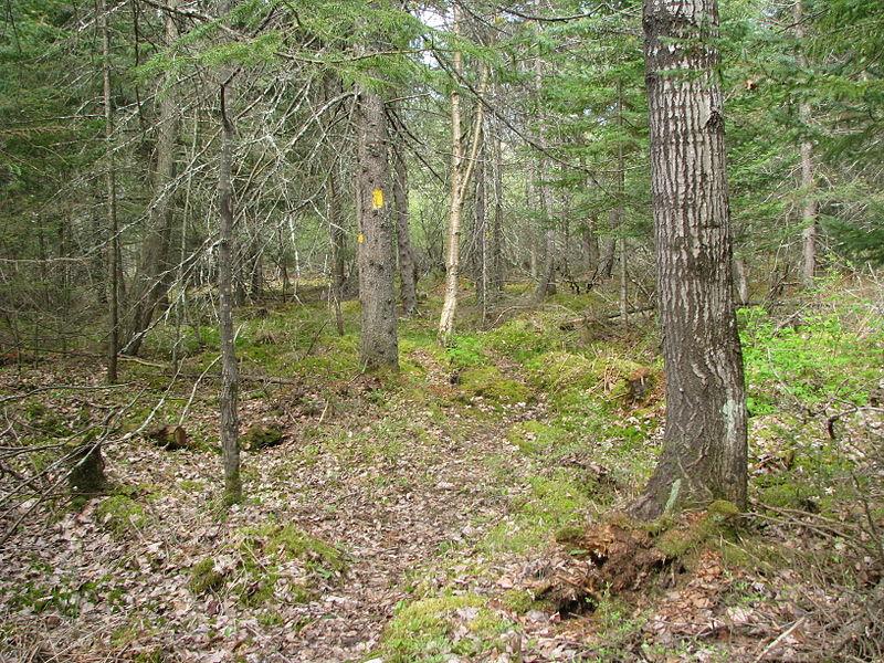 File:IAT New Wood.JPG