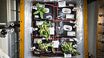 ISS-46 Zinnia flowers in the Veggie facility (2).jpg