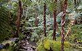 Ilha de São Miguel PC310186 (25067375726).jpg