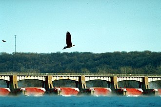 Lock and Dam No. 14 - During the winter season the area around Lock and Dam No. 14 is home to many bald eagles.