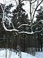 Imanta, Kurzeme District, Riga, Latvia - panoramio (34).jpg