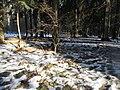 In the spring forest. February 2014. - В весеннем лесу. Февраль 2014. - panoramio.jpg