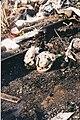 Incêndio na Favela (16737948664).jpg
