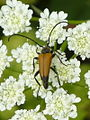 Insect 1350492.jpg