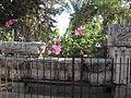 Israel Capernaum Ark of the Covenant.jpg