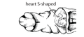 J3. Ventricle S-shaped (V10c).png