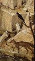 Jacopo bellini, san girolamo nel deserto, dalla coll. pompei, vr 09 merlo e volpe.jpg