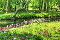 Japan - Tochigi, lake Chuzenji Primula japonica 2016 1.jpg