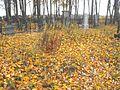 Jewish cemetery Smolevichi 2c.jpg
