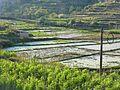 Jianshui Xian - Yemacun - paddy fields - P1360815.JPG