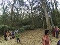 Junglepark.jpg