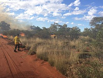Department of Parks and Wildlife (Western Australia) - WA Parks and Wildlife fire crew lighting a prescribed burn (echelon lighting) at Octopus Bore track buffer, Lorna Glen former pastoral lease, now joint managed with traditional owners, May 2015.