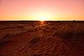 Kalahari landscape, Kalahari, Northern Cape, South Africa (19922214883).jpg