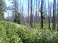 Kalininsky District, Tver Oblast, Russia - panoramio (27).jpg