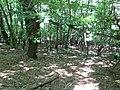 Kaniv Nature Reserve (May 2018) 27.jpg