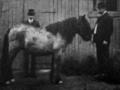 Karjalainen 1909.png