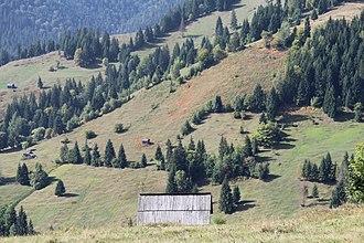 Tourism in Romania - Slătioara secular forest near Câmpulung Moldovenesc in Suceava County, northeastern Romania