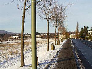 ドクメンタ7(1982年)で開始した『7000本の樫の木』プロジェクト。ドイツ・カッセルにて