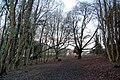 Kearsney Abbey footpath looking towards Chilton Way - geograph.org.uk - 1075642.jpg