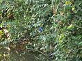 Kingfisher (2135572442).jpg