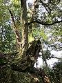 Kinosakicho Yushima, Toyooka, Hyogo Prefecture 669-6101, Japan - panoramio (9).jpg
