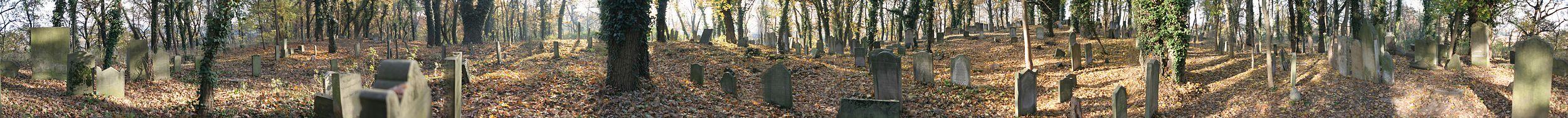 Panoramiczny widok na cmentarz żydowski w Skwierzynie (październik 2015)