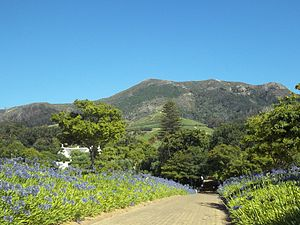 Klein Constantia - The road leading to the Klein Constantia Manor House, Cellar and Tasting Room