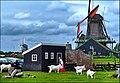 Kogerveld, Zaandam - panoramio.jpg