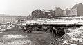 Kopanje zemlje za gradnjo nasipa ob Dravi 1956.jpg