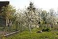 Książnica - wiosna - panoramio.jpg