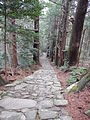 Kumano Kodo pilgrimage route Daimon-zaka World heritage 熊野古道 大門坂43.JPG