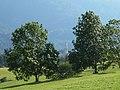 La Pieve - 4-3 - panoramio.jpg